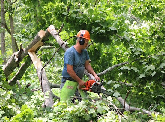 Ky Power Tree Trimming Plan Resulting In Improved